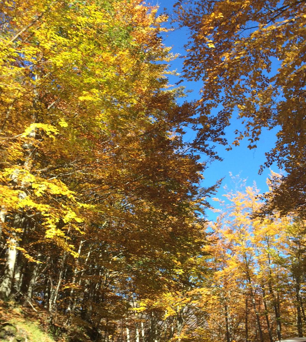 autunno-visto-attraverso-le-lenti...-neubau-eyewear