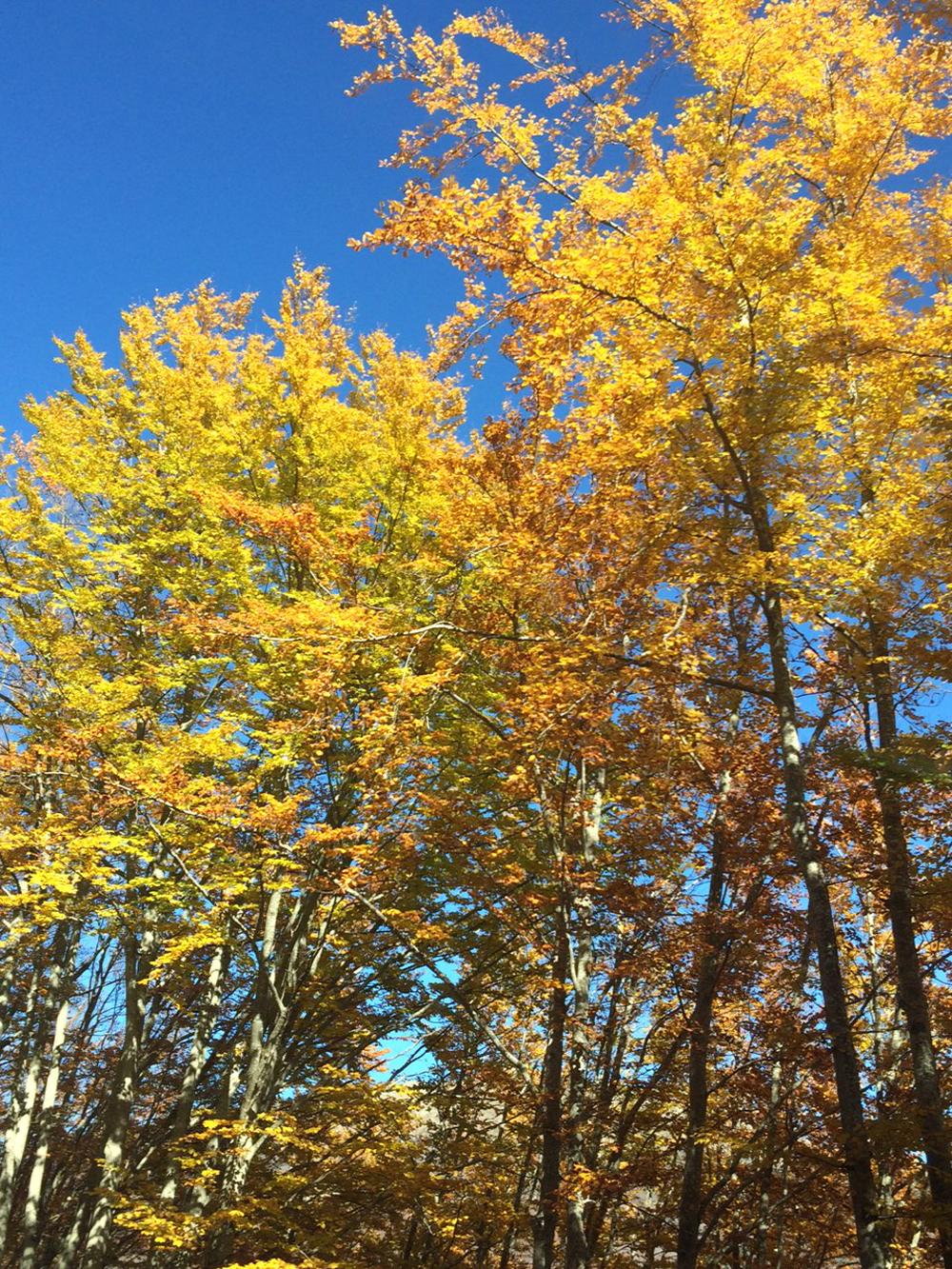 autunno-visto-attraverso-le-lenti...-neubau-sweetlavanda-blog